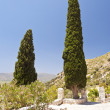 Cypress on Samos — Stock Photo