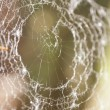 Spiderweb — Stock Photo #10080815