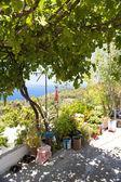 Grape-vine on Samos — Stock Photo