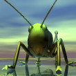 Migratory locust - Stock Photo