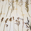 Herbarium - Stock Photo