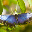 Butterfly — Stock Photo #10123013