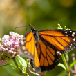 Butterfly — Stock Photo #10125433