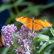 Butterfly — Stock Photo #10126076