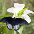 Butterfly — Stock Photo #10126100