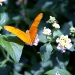 Butterfly — Stock Photo #10126111