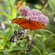Butterfly — Stock Photo #10126127
