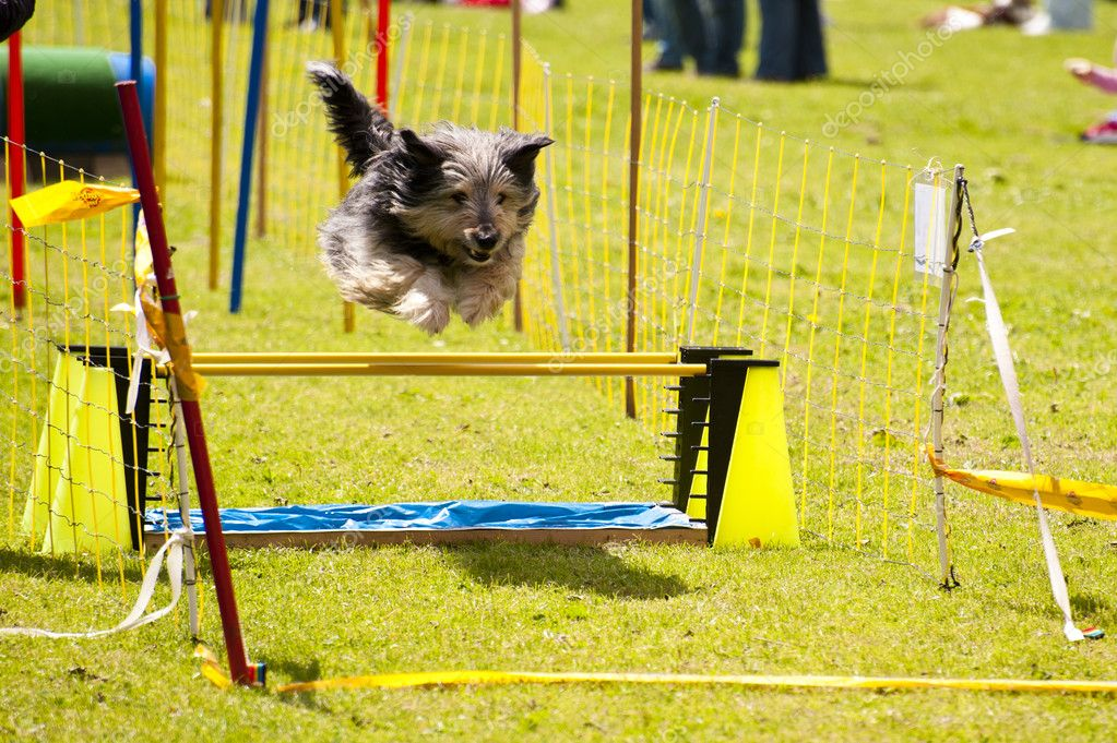 Scene of a dog running  Stock Photo #10123717