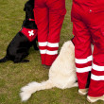 Scene on a dog meeting sept. 2009 in kiel, germany — Stock Photo #10144988