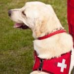 Scene on a dog meeting sept. 2009 in kiel, germany — Stock Photo #10144991