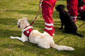 Scene on a dog meeting sept. 2009 in kiel, germany — Стоковое фото