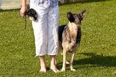 Scene on a dog meeting sept. 2009 in kiel, germany — Stock Photo