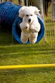 сцена на сентябрь встреча собаки. 2009 в киле, германия — Стоковое фото