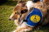 Olay yerinde bir köpek toplantı eyl. kiel, almanya 2009 — Stok fotoğraf