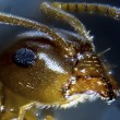 Microphoto: Ant before dark background — Stock Photo