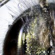 Microphoto: Detail of a bee — Stock Photo
