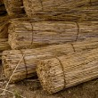 Reed — Stock Photo #10163718