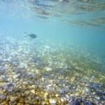 Underwater — Stock Photo #10178151