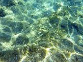Underwater in the aegean — Stock fotografie