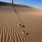 GIRL IN DESERT — Stock Photo