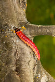 The big, bright beautiful caterpillar creeps on an apple-tree trunk — Stock Photo