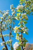 Apple-tree in colour — Stock Photo