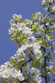 Apple-tree in colour — Stock Photo