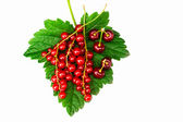 Currant and cherry — Stock Photo