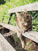 Reposing cat — Stock Photo
