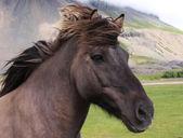 A grey horse head — Stock Photo