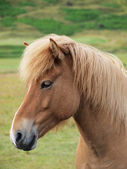 A head of a brown horse — Stock Photo