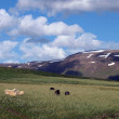Sheep on a mountain slope in Iceland — Stock Photo