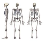Homo erectus — Stock Photo