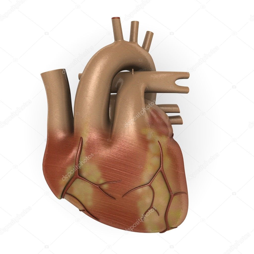 3d render of human heart — Stock Photo #10075304