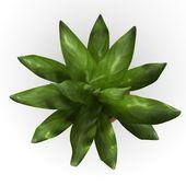 3d renderowania zanokcica kwiat — Zdjęcie stockowe