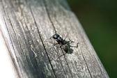 外部 ant — ストック写真