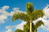 Trees Sky — Stock Photo