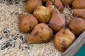 Brown Pears — Zdjęcie stockowe