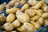 Outside Potatoes — Stock Photo