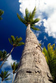 Tropical Palm Trees — Stock Photo