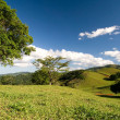 Rolling Hills of the Dominican - Stock Photo