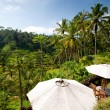 Ubud Rice Terraces  Cafe, Bali - Stock Photo
