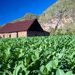 Tabacco Drying House - Vinales, Cuba — Stock Photo
