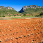 Pineapple field, Vinales, Cuba — Stock Photo