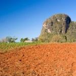 Red earth farmland, Vinales, Cuba — Stock Photo