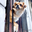 Dog in the window - Havana, Cuba — Stockfoto