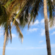 Beach scene - Varadero, Cuba — Stock Photo #10271321