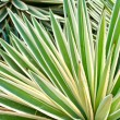Spikey Tropical Plant — Stock Photo
