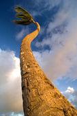 Wind Swept Palm Tree — Stock Photo