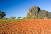 Red earth farmland, Vinales, Cuba — Stock Photo